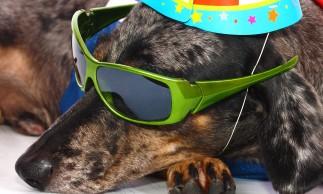 Pet Parties